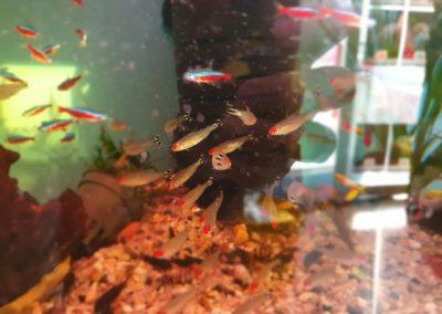 ryby akwarium ZooNemo Legionowo sobieskiego 5