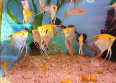 ryby akwarium ZooNemo Legionowo sobieskiego 6