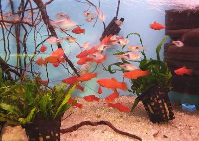 ryby akwarium ZooNemo Legionowo sobieskiego 7