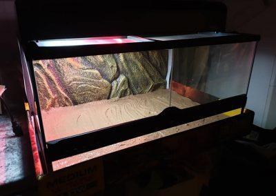 terrarium dla Gekona lamparciego Legionowo Nowy Dwór Mazowiecki 5
