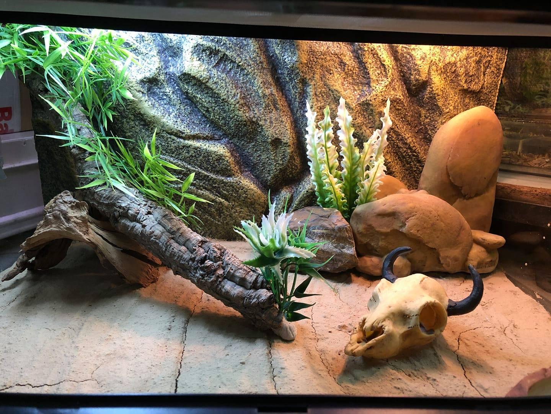 terrarium dla Gekona lamparciego Legionowo Nowy Dwór Mazowiecki 7