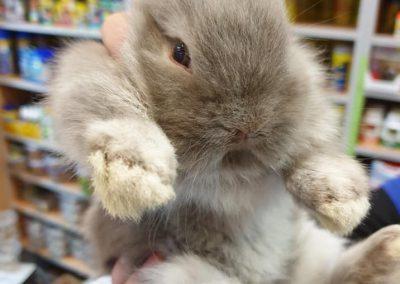 zwierzęta królik miniaturka Legionowo ZooNemo