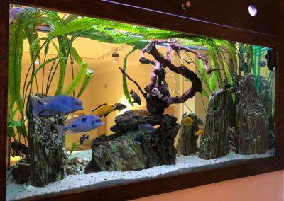 Opieka nad akwarium Legionowo Nowy Dwór Mazowiecki ZooNemo