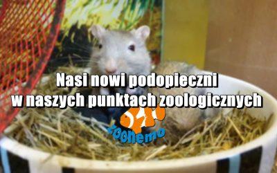 Nasi nowi podopieczni w naszych punktach zoologicznych ZooNemo