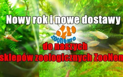 Nowy rok i nowe dostawy do naszych sklepów zoologicznych ZooNemo