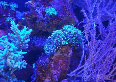 akwarium morskie Legionowo Sobieskiego ZooNemo 10