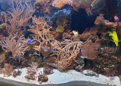 akwarium morskie Legionowo Sobieskiego ZooNemo 2