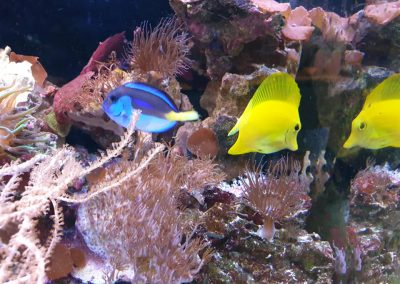 akwarium morskie Legionowo Sobieskiego ZooNemo 5