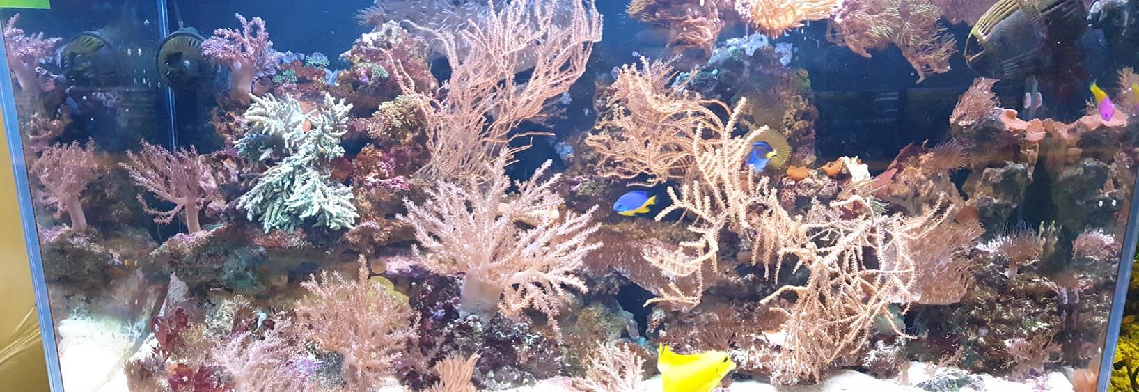 akwarium morskie Legionowo Sobieskiego ZooNemo