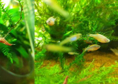 krewetki akwarium Legionowo Nowy Dwór Mazowiecki ZooNemo 1-horz