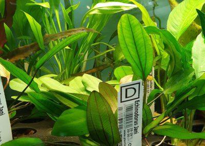 rośliny akwariowe Legionowo Nowy Dwór Mazowiecki ZooNemo 2