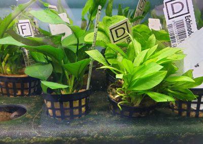 rośliny akwariowe Legionowo Nowy Dwór Mazowiecki ZooNemo 3