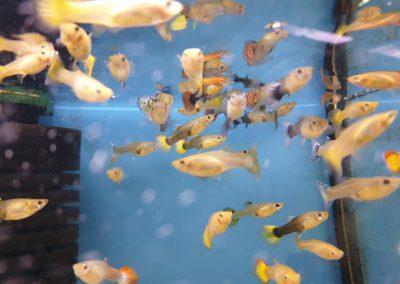 ryby akwariowe Legionowo Nowy Dwór Mazowiecki ZooNemo 10
