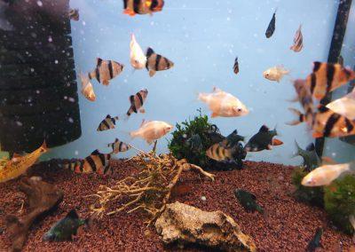 ryby akwariowe Legionowo Nowy Dwór Mazowiecki ZooNemo 2