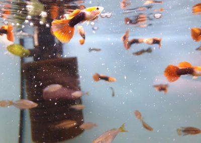 ryby akwariowe Legionowo Nowy Dwór Mazowiecki ZooNemo 3