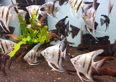 ryby akwariowe Legionowo Nowy Dwór Mazowiecki ZooNemo 4