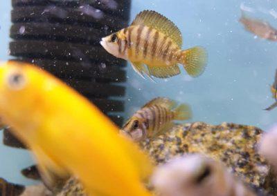 ryby akwariowe Legionowo Nowy Dwór Mazowiecki ZooNemo 5
