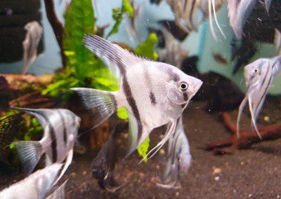 ryby akwariowe Legionowo Nowy Dwór Mazowiecki ZooNemo 6