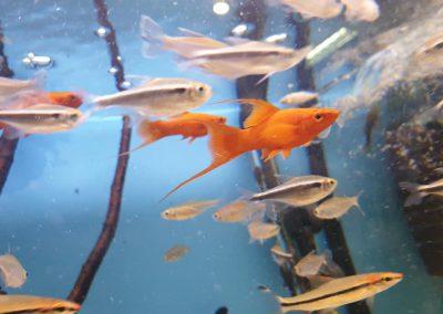 ryby akwariowe Legionowo Nowy Dwór Mazowiecki ZooNemo 7