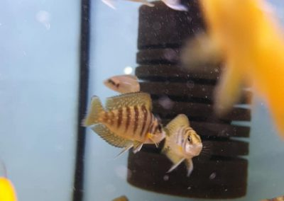 ryby akwariowe Legionowo Nowy Dwór Mazowiecki ZooNemo 8