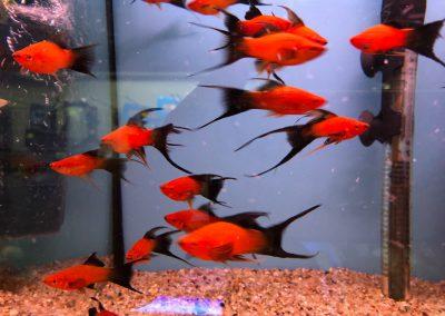 ryby akwariowe Legionowo Sobieskiego ZooNemo 3