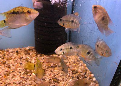 ryby akwariowe Legionowo Sobieskiego ZooNemo 4