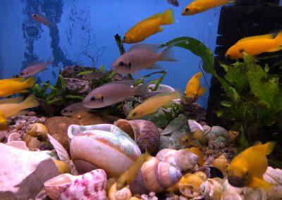 ryby akwariowe Legionowo Sobieskiego ZooNemo 5