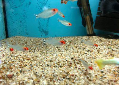 ryby akwariowe Legionowo Sobieskiego ZooNemo 6