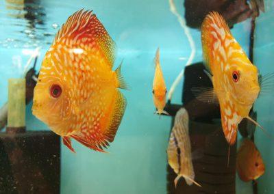 ryby akwariowe Nowy Dwór Mazowiecki ZooNemo 1