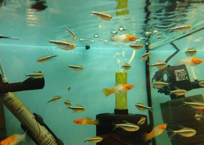 ryby akwariowe Nowy Dwór Mazowiecki ZooNemo 10