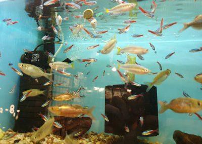 ryby akwariowe Nowy Dwór Mazowiecki ZooNemo 11