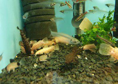 ryby akwariowe Nowy Dwór Mazowiecki ZooNemo 13