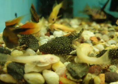 ryby akwariowe Nowy Dwór Mazowiecki ZooNemo 3