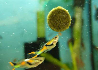 ryby akwariowe Nowy Dwór Mazowiecki ZooNemo 4