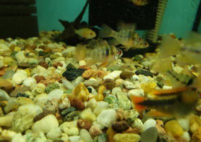 ryby akwariowe Nowy Dwór Mazowiecki ZooNemo 5