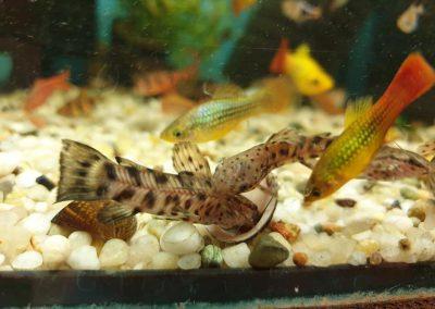ryby akwariowe Nowy Dwór Mazowiecki ZooNemo 9