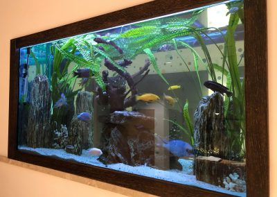 serwis akwarium Legionowo Nowy Dwór Mazowiecki ZooNemo 2