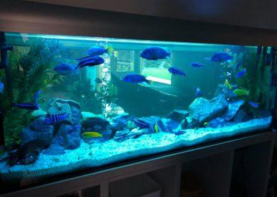 serwis akwarium Legionowo Nowy Dwór Mazowiecki ZooNemo 4