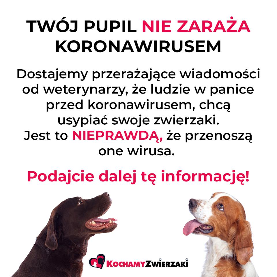 koronowirus legionowo ZooNemo