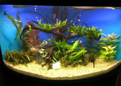 akwarystyka akwaria zakładanie akwarium opieka Legionowo Nowy Dwór Mazowiecki ZooNemo 2