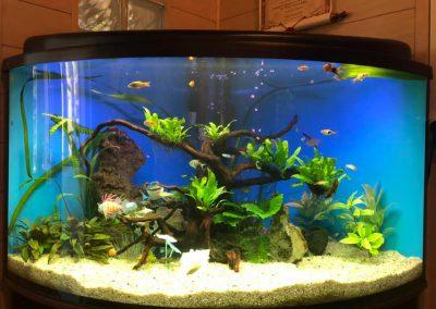 akwarystyka akwaria zakładanie akwarium opieka Legionowo Nowy Dwór Mazowiecki ZooNemo 3