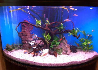akwarystyka akwaria zakładanie akwarium opieka Legionowo Nowy Dwór Mazowiecki ZooNemo 4