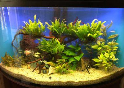 akwarystyka akwaria zakładanie akwarium opieka Legionowo Nowy Dwór Mazowiecki ZooNemo