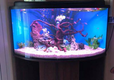 akwarystyka akwaria zakładanie akwarium opieka Legionowo Nowy Dwór Mazowiecki ZooNemo 5