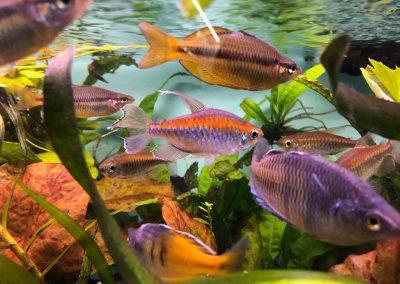 ryby akwariowe Legionowo Nowy Dwór Mazowiecki akwarystyka sklep sobieskiego 2