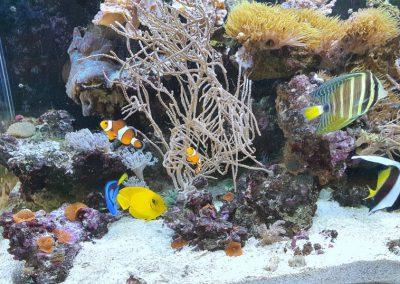 akwarium o biotopie morskim ZooNemo Legionowo 2