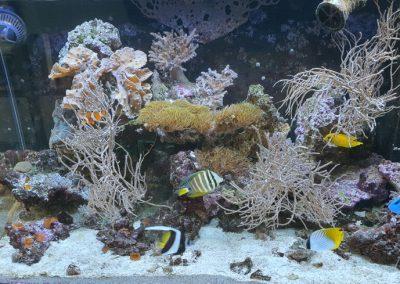 akwarium o biotopie morskim ZooNemo Legionowo 3