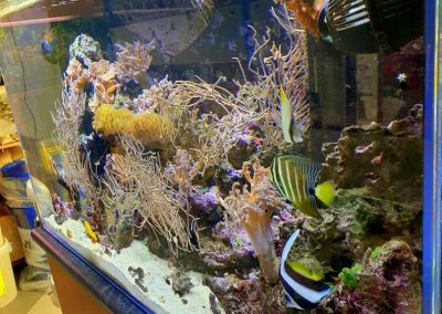 akwarium o biotopie morskim ZooNemo Legionowo