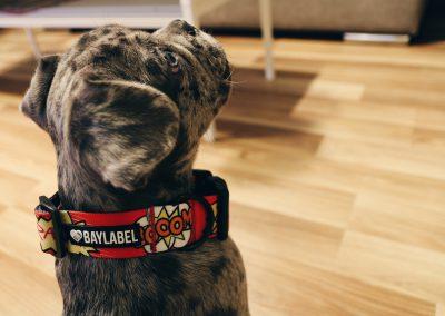 Freddi prezentujący nową markę od Baylabel ZooNemo Legionowo Nowy Dwór Mazowiecki (1)